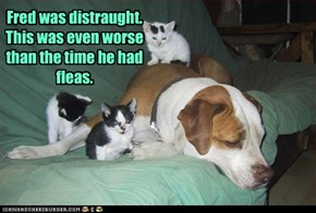 Fred was distraught. This was even worse than the time he had fleas.