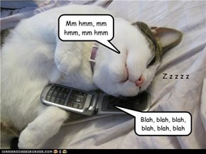 Husband kitty listens to wife on phone