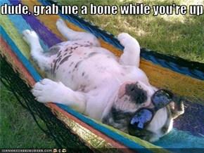 Lazy Day Dog