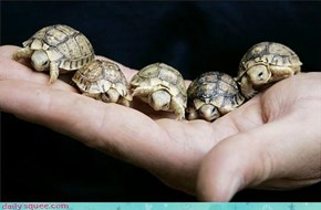 Thats A Handful of Tiny Turtles You Got There!