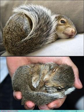 Squeerril