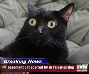 Breaking News - basemant cat scarred by ur relashonship