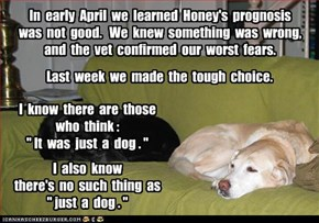 Honey, our beloved yellow lab
