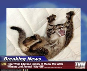 Breaking News - Tiger Wins Lifetime Supply of Meow Mix After Winning 2nd Annual 'Nap-Off'........................