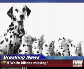 Breaking News - 5 White kittens missing!