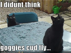 I didunt think  goggies cud fly...