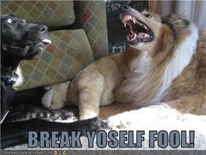 BREAK YOSELF FOOL!