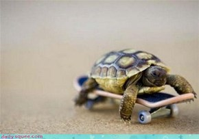Tiny Turtle on a Squeeboard