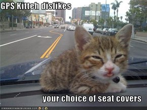 GPS Kitteh dislikes  your choice of seat covers