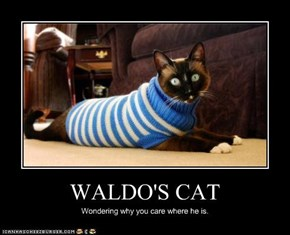 WALDO'S CAT