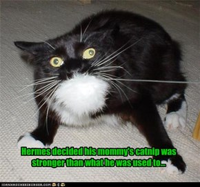 A nawty kitty realizes his mistake