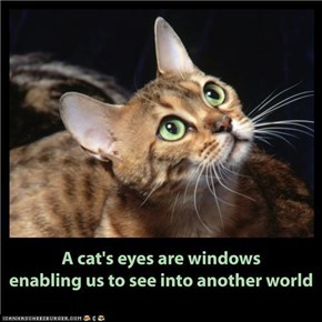 A cat's eyes are windows . . . . .