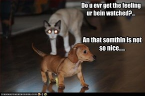 Do u evr get the feeling  ur bein watched?...