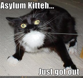 Asylum Kitteh...  Just got out