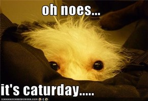 oh noes...  it's caturday.....