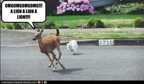 paranoid deer say