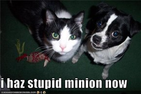 i haz stupid minion now