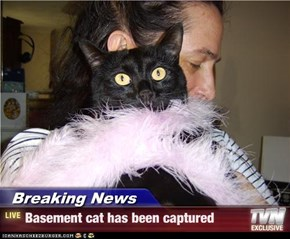 Breaking News - Basement cat has been captured