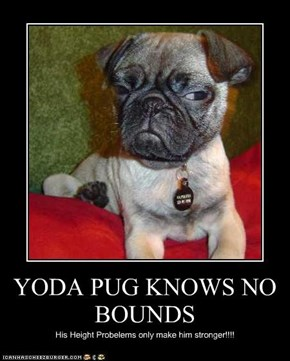 YODA PUG KNOWS NO  BOUNDS
