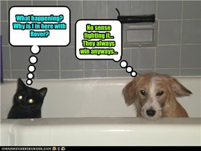 Cat's first bath time with veteran dog.