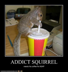 ADDICT SQUIRREL