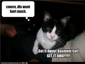 Get It Away! Basment Cat!  GET IT AWAY!!!!