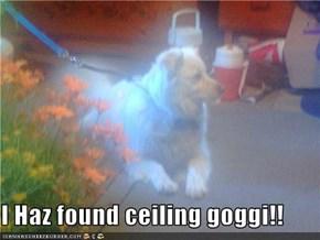 I Haz found ceiling goggi!!