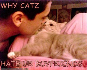 WHY CATZ  HATE UR BOYFRIENDS