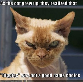 "As the cat grew up, they realized that  ""Giggles"" was not a good name choice"
