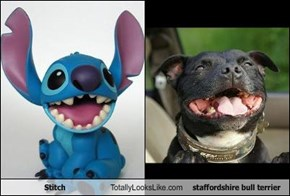 Stitch Totally Looks Like staffordshire bull terrier