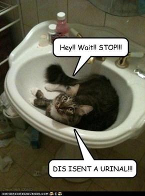 U luk drunk, hooman...