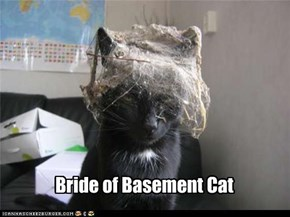 Bride of Basement Cat