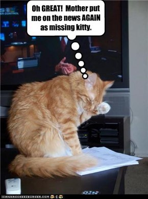 Oh GREAT!  Mother put me on the news AGAIN as missing kitty.