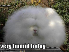 .........  very humid today..........