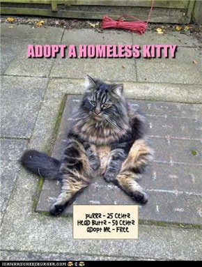 ADOPT A HOMELESS KITTY