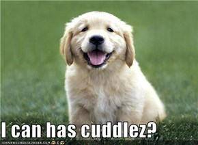 I can has cuddlez?