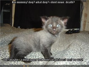 Hai mommy! dog? what dog? i dont nowe. death?   um... maybe... a dognapper took him! suspicious? me? no way!