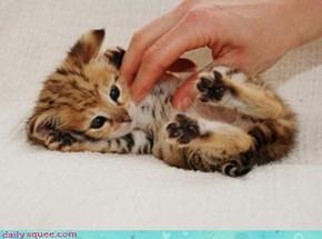 Tickle Spots!