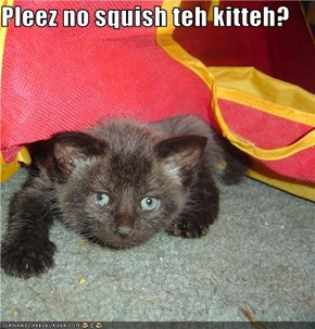 Pleez no squish teh kitteh?
