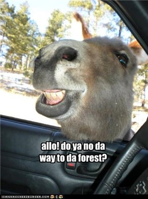 allo! do ya no da way to da forest?