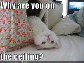 Why are you on   the ceiling?