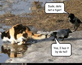 Dude, dats not a tiger!