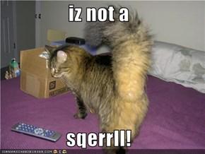 iz not a  sqerrll!