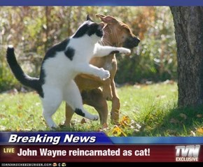 Breaking News - John Wayne reincarnated as cat!