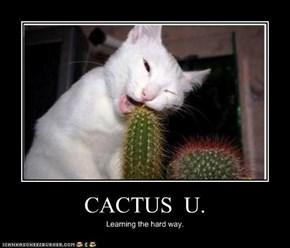 CACTUS  U.
