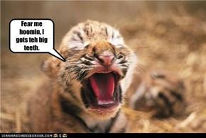 Fear me hoomin, I gots teh big teeth.