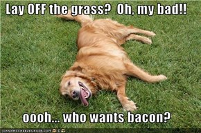 Lay OFF the grass?  Oh, my bad!!  oooh... who wants bacon?