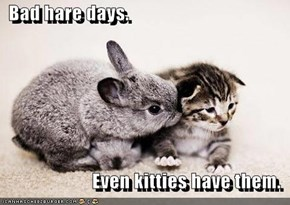 Bad hare days.