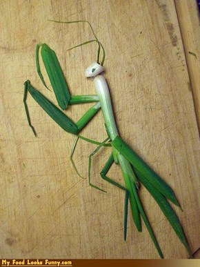 Scallion Mantis