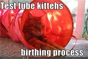 Test tube kittehs  birthing process